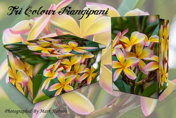 Frangipani Tri Coloured Cremation Urn